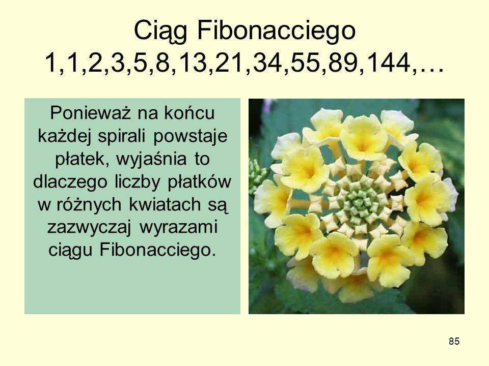 85 Ciąg Fibonacciego 1,1,2,3,5,8,13,21,34,55,89,144,… Ponieważ na końcu każdej spirali powstaje płatek, wyjaśnia to dlaczego liczby płatków w różnych