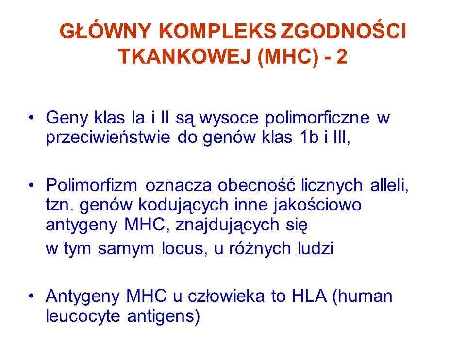 GŁÓWNY KOMPLEKS ZGODNOŚCI TKANKOWEJ (MHC) - 2 Geny klas Ia i II są wysoce polimorficzne w przeciwieństwie do genów klas 1b i III, Polimorfizm oznacza