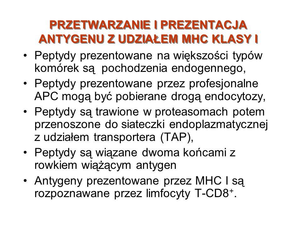 PRZETWARZANIE I PREZENTACJA ANTYGENU Z UDZIAŁEM MHC KLASY I Peptydy prezentowane na większości typów komórek są pochodzenia endogennego, Peptydy preze
