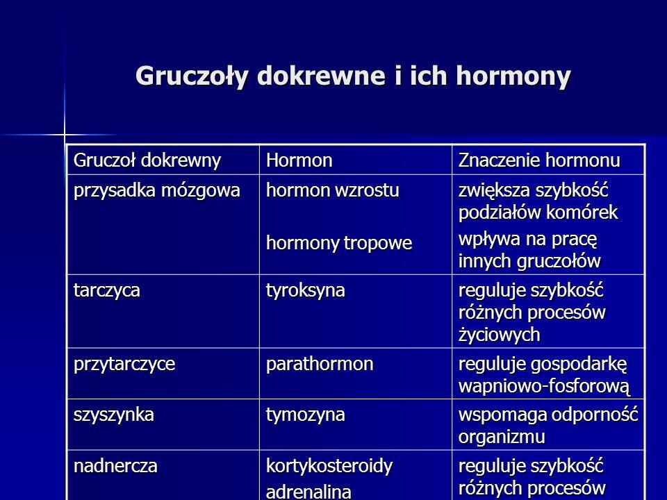 Gruczoły dokrewne i ich hormony Gruczoł dokrewny Hormon Znaczenie hormonu przysadka mózgowa hormon wzrostu hormony tropowe zwiększa szybkość podziałów