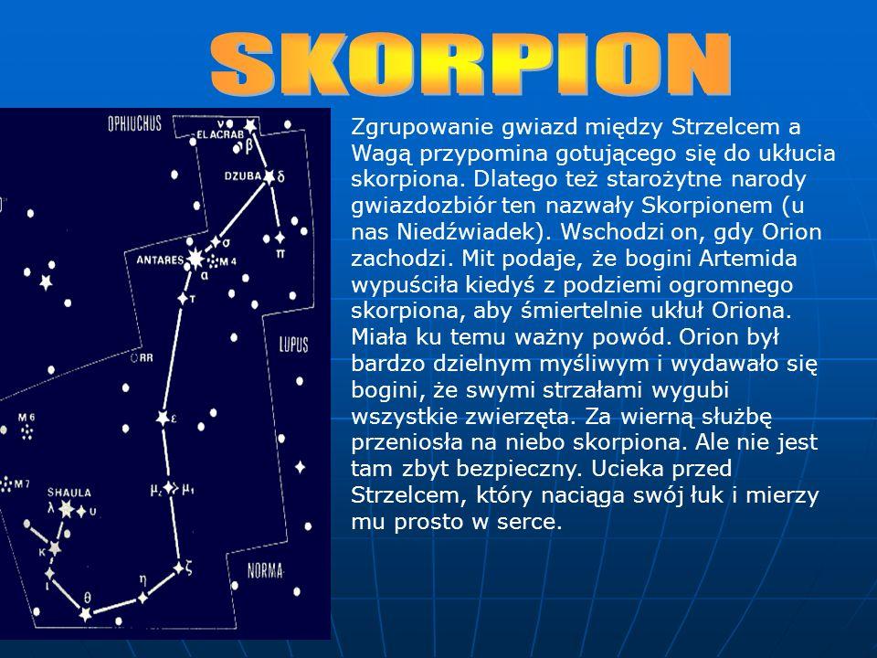 Zgrupowanie gwiazd między Strzelcem a Wagą przypomina gotującego się do ukłucia skorpiona.