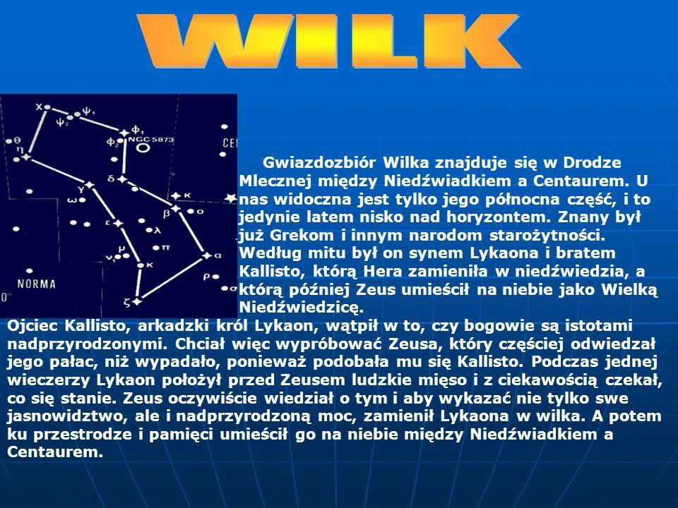 Gwiazdozbiór Wilka znajduje się w Drodze Mlecznej między Niedźwiadkiem a Centaurem. U nas widoczna jest tylko jego północna część, i to jedynie latem