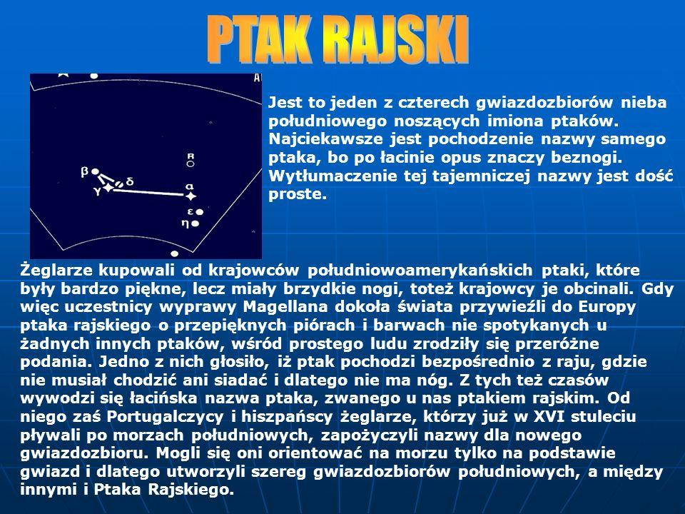 Jest to jeden z czterech gwiazdozbiorów nieba południowego noszących imiona ptaków. Najciekawsze jest pochodzenie nazwy samego ptaka, bo po łacinie op