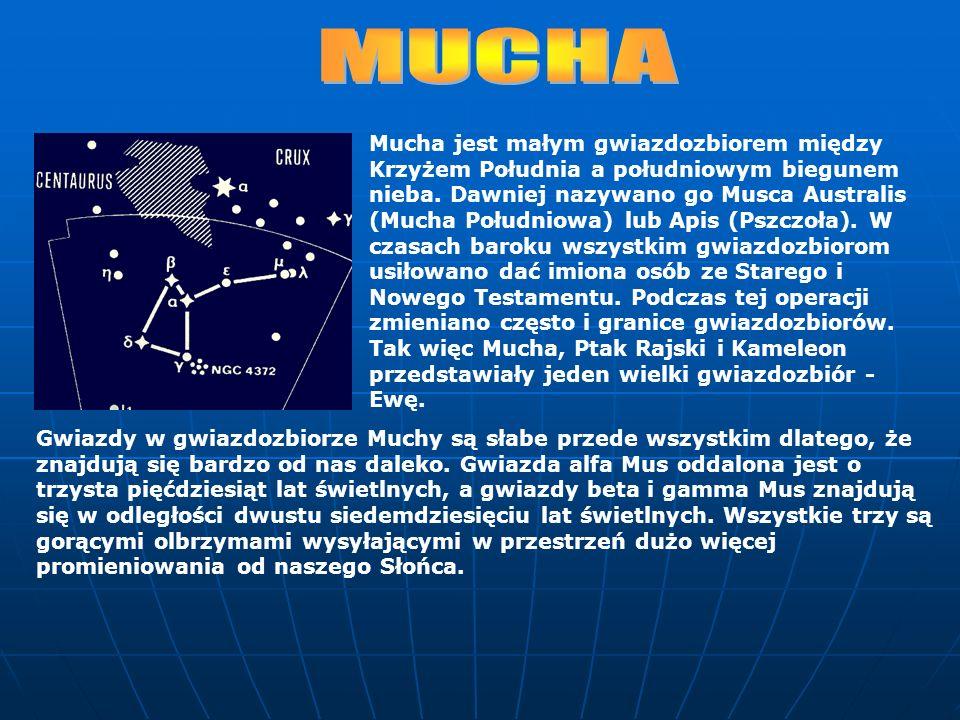 Mucha jest małym gwiazdozbiorem między Krzyżem Południa a południowym biegunem nieba. Dawniej nazywano go Musca Australis (Mucha Południowa) lub Apis