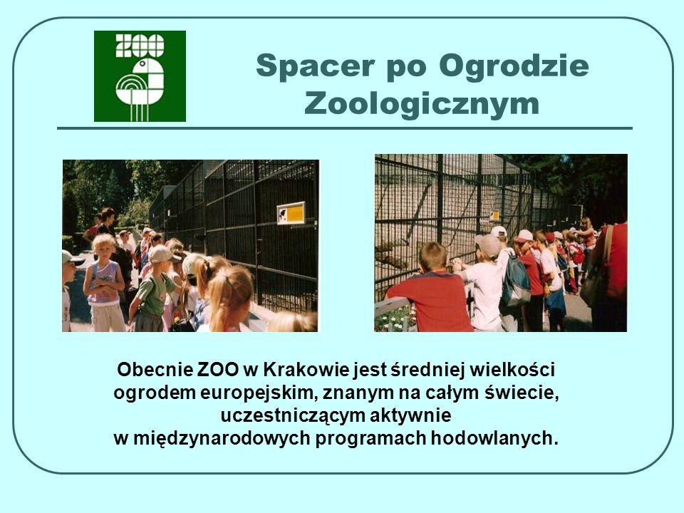 Spacer po Ogrodzie Zoologicznym Obecnie ZOO w Krakowie jest średniej wielkości ogrodem europejskim, znanym na całym świecie, uczestniczącym aktywnie w