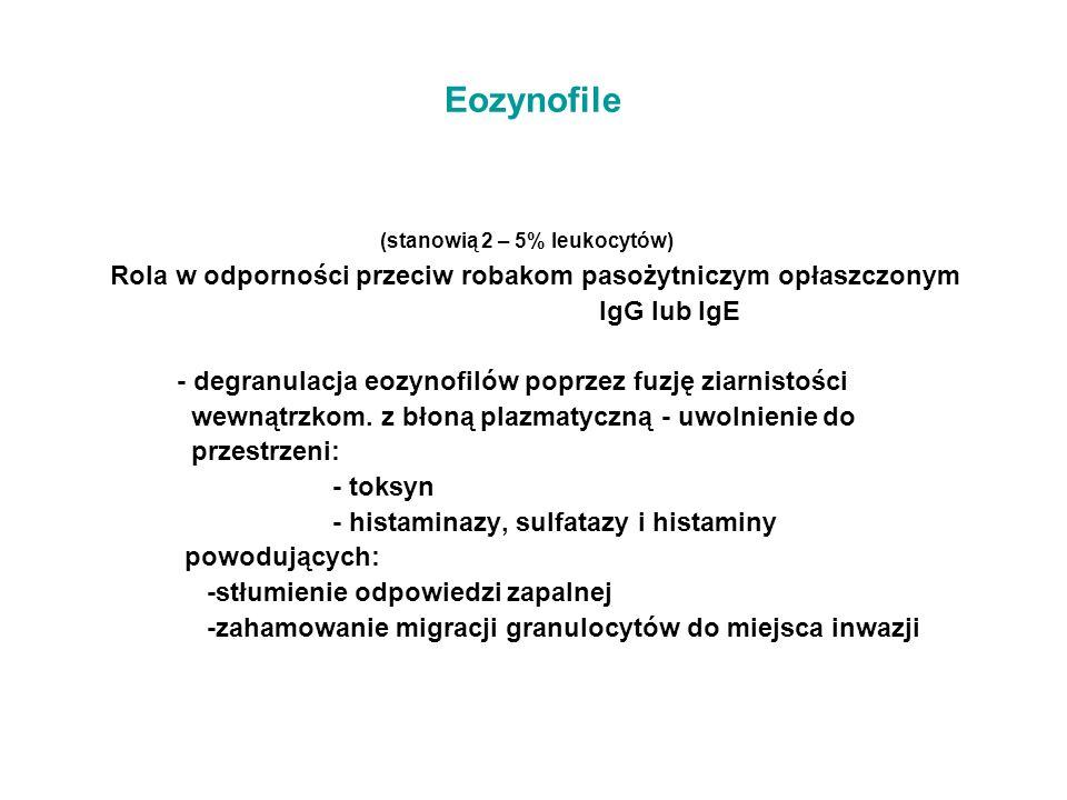Eozynofile (stanowią 2 – 5% leukocytów) Rola w odporności przeciw robakom pasożytniczym opłaszczonym IgG lub IgE - degranulacja eozynofilów poprzez fu