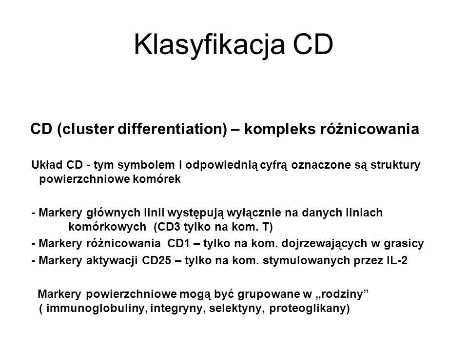 Klasyfikacja CD CD (cluster differentiation) – kompleks różnicowania Układ CD - tym symbolem i odpowiednią cyfrą oznaczone są struktury powierzchniowe