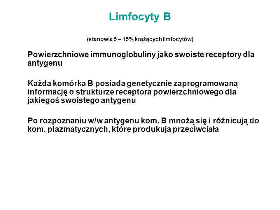 Limfocyty B (stanowią 5 – 15% krążących limfocytów) Powierzchniowe immunoglobuliny jako swoiste receptory dla antygenu Każda komórka B posiada genetyc