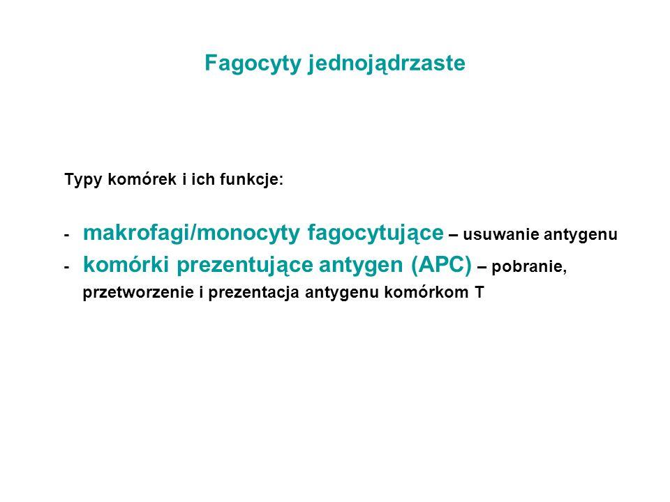 Fagocyty jednojądrzaste Typy komórek i ich funkcje: - makrofagi/monocyty fagocytujące – usuwanie antygenu - komórki prezentujące antygen (APC) – pobra