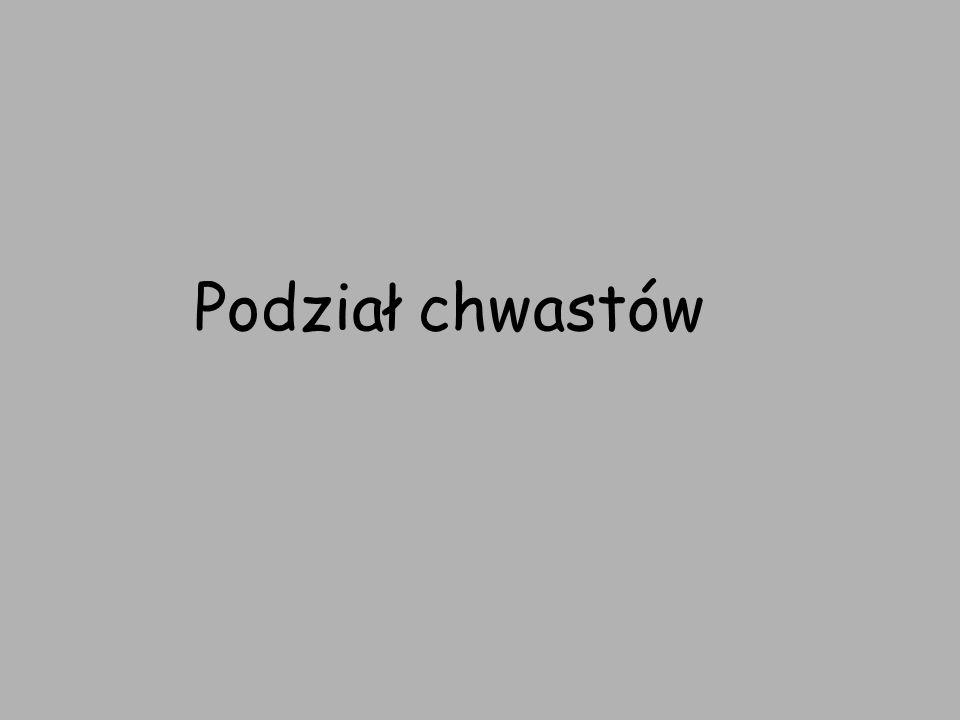 Komosa biała Nazwa łacińska: Chenopodium album Rodzina: Komosowate Okres kwitnienia: od lipca do października Siedlisko: pola uprawne, przydroża, ugory Występowanie w Polsce: na niżu