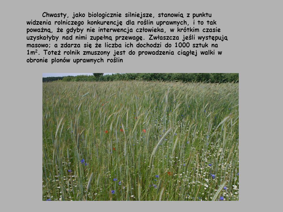 Podział chwastów ze względu na miejsce występowania Wszystkie chwasty ze względu na miejsce występowania dzielimy na trzy podstawowe grupy Chwasty łąk i pastwisk Chwasty ruderalne (chwasty występujące przy zabudowaniach, pod płotami, miedzach i nieużytkach) Chwasty segetalne (chwasty pól uprawnych, dzielimy je ze względu na wysokość do jakiej dorastają) - I piętro stanowią chwasty wyższe od rośliny uprawnej np..