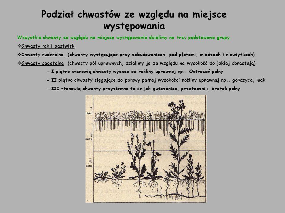 Podział chwastów na grupy biologiczne (w oparciu o cykl rozwojowy i sposoby odżywiania) Chwasty krótkotrwałe a)Jare b)Zimujące i ozime c)Chwasty dwuletnie Chwasty wieloletnie a)o mięsistym korzeniu palowym b)cebulkowe c)kłączowo-rozłogowe d)Korzeniowo-rozłogowe Chwasty pasożytnicze