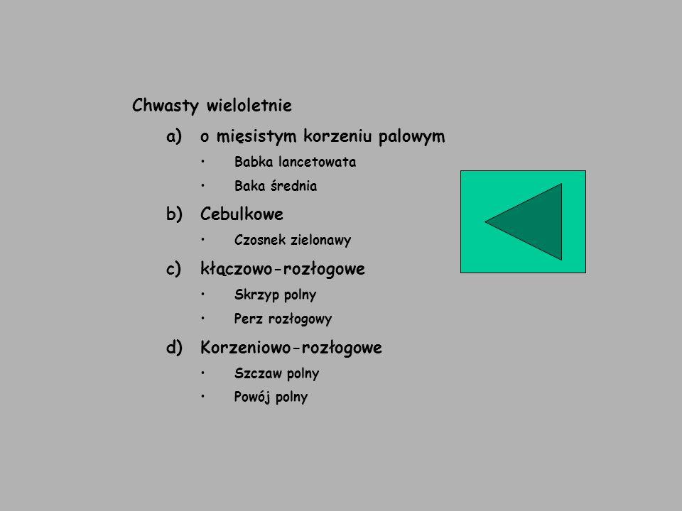 Chwasty wieloletnie a)o mięsistym korzeniu palowym Babka lancetowata Baka średnia b)Cebulkowe Czosnek zielonawy c)kłączowo-rozłogowe Skrzyp polny Perz