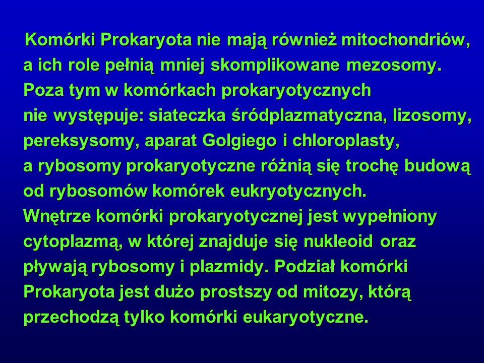 Komórki Prokaryota nie mają również mitochondriów, a ich role pełnią mniej skomplikowane mezosomy. Poza tym w komórkach prokaryotycznych nie występuje