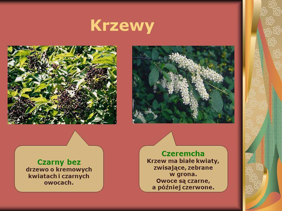 Runo leśne Najniższą warstwę, zwaną runem leśnym, tworzą: paprocie, mchy, borówki, grzyby i rośliny zielne.