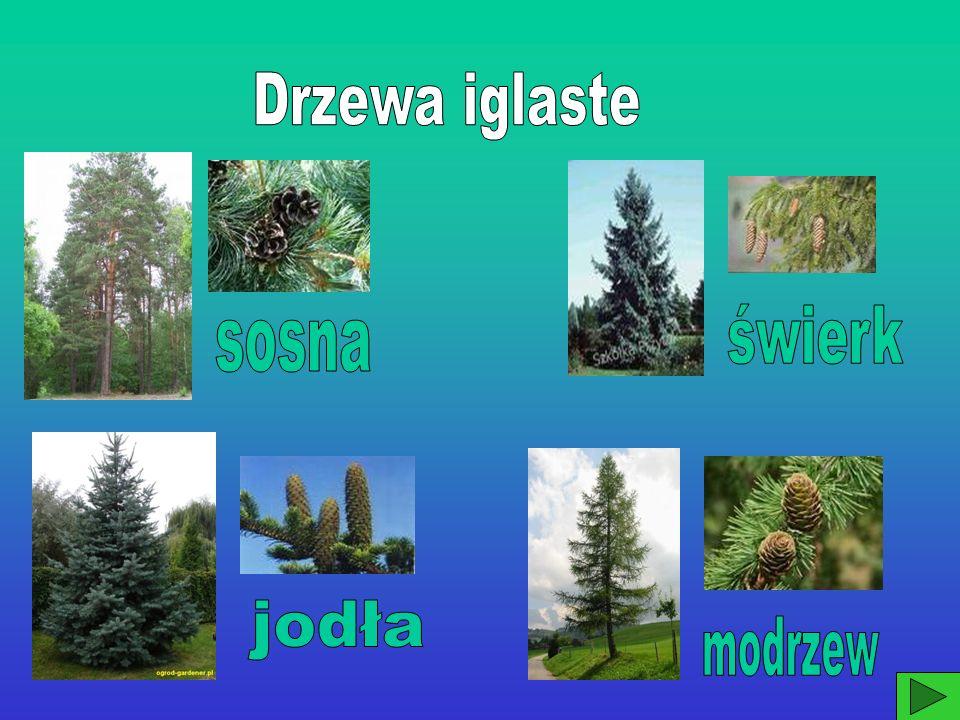 Znaczenie lasu w środowisku.1.