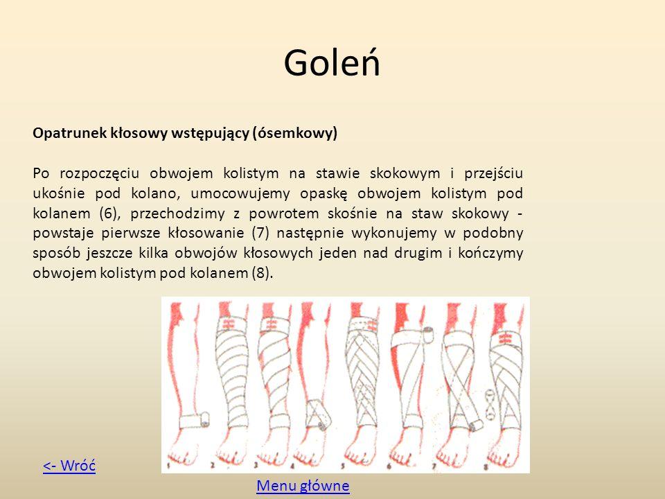 Goleń Opatrunek kłosowy wstępujący (ósemkowy) Po rozpoczęciu obwojem kolistym na stawie skokowym i przejściu ukośnie pod kolano, umocowujemy opaskę ob