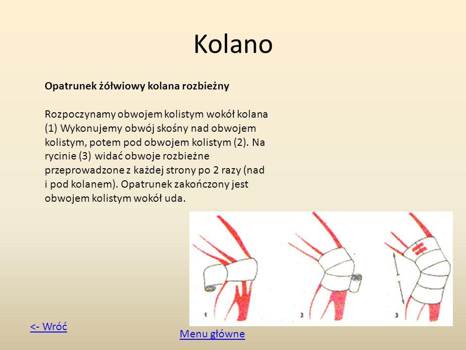 Kolano Opatrunek żółwiowy kolana rozbieżny Rozpoczynamy obwojem kolistym wokół kolana (1) Wykonujemy obwój skośny nad obwojem kolistym, potem pod obwo