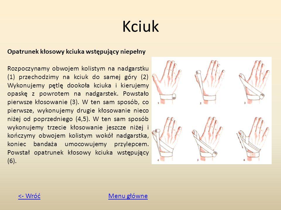 Kciuk Opatrunek kłosowy kciuka wstępujący niepełny Rozpoczynamy obwojem kolistym na nadgarstku (1) przechodzimy na kciuk do samej góry (2) Wykonujemy