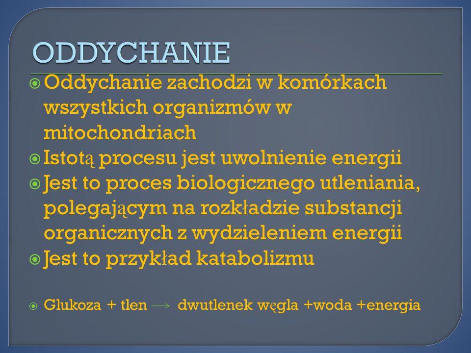 Oddychanie zachodzi w komórkach wszystkich organizmów w mitochondriach Istot ą procesu jest uwolnienie energii Jest to proces biologicznego utleniania