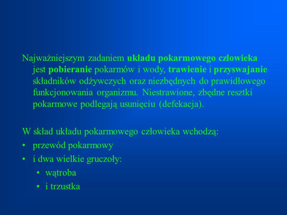 Jelito grube dzieli się na jelito ślepe (kątnicę), okrężnicę i odbytnicę.