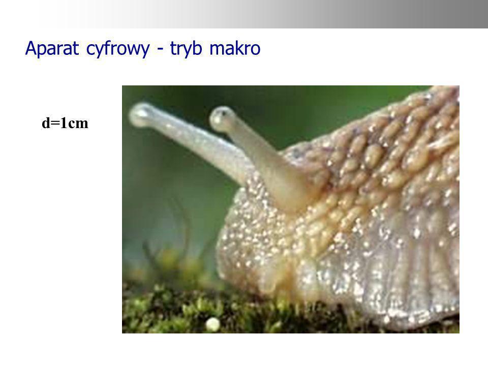 Aparat cyfrowy - tryb makro d=1cm