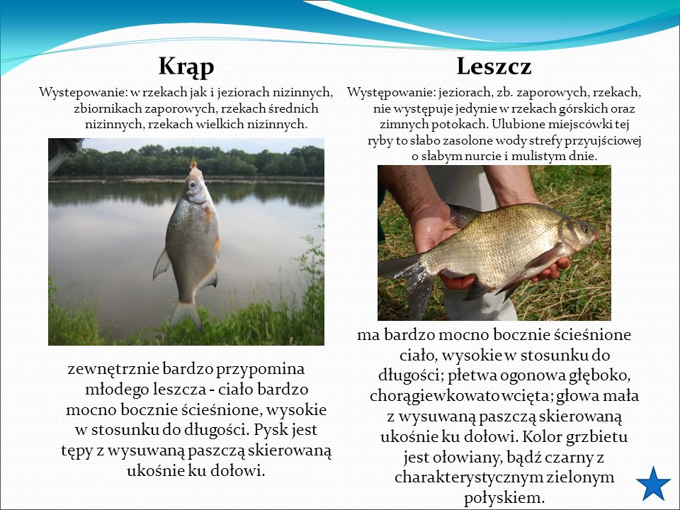 Krąp Wystepowanie: w rzekach jak i jeziorach nizinnych, zbiornikach zaporowych, rzekach średnich nizinnych, rzekach wielkich nizinnych. zewnętrznie ba