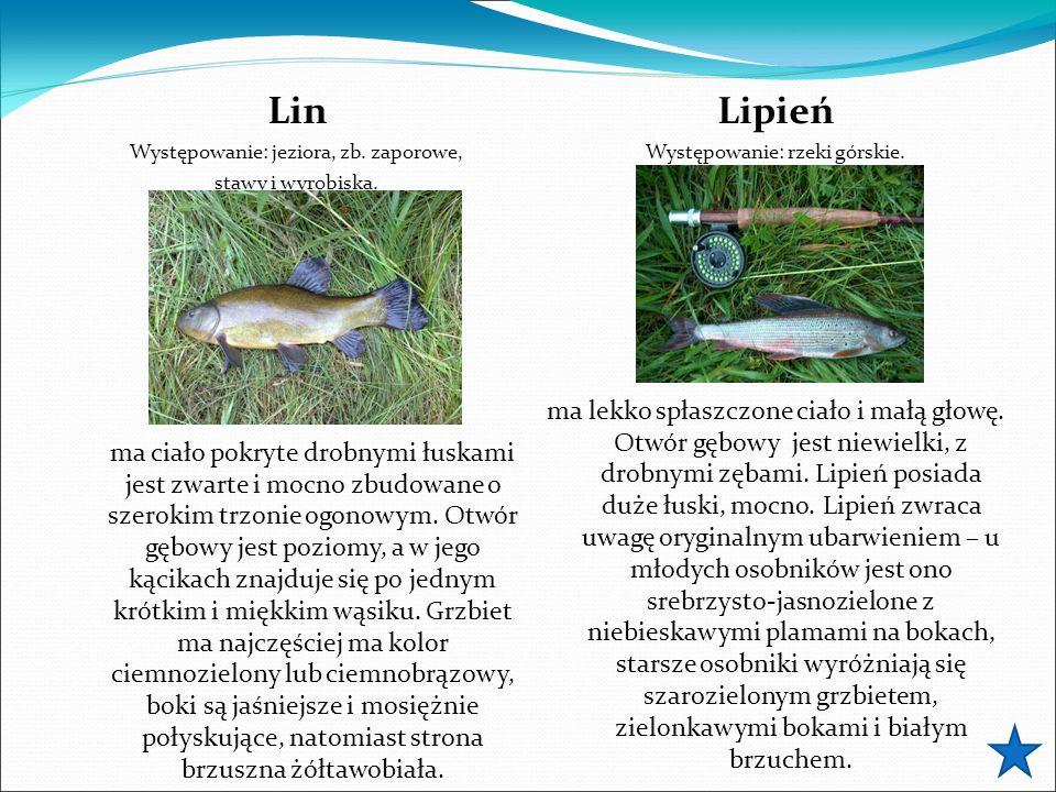 Lin Występowanie: jeziora, zb. zaporowe, stawy i wyrobiska. ma ciało pokryte drobnymi łuskami jest zwarte i mocno zbudowane o szerokim trzonie ogonowy