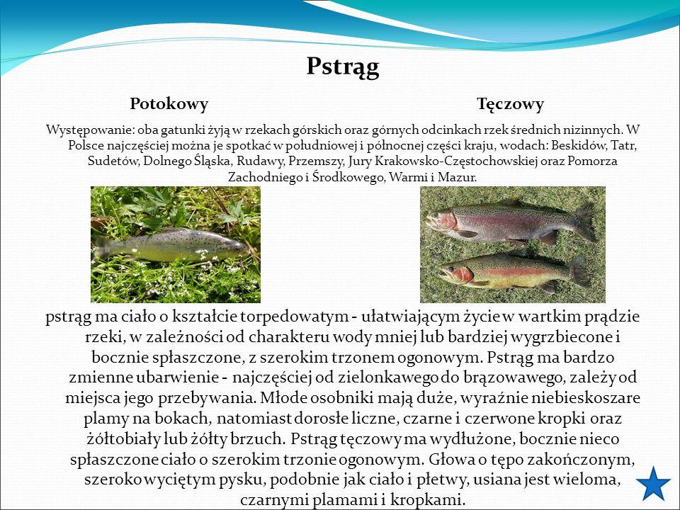 Pstrąg Występowanie: oba gatunki żyją w rzekach górskich oraz górnych odcinkach rzek średnich nizinnych. W Polsce najczęściej można je spotkać w połud