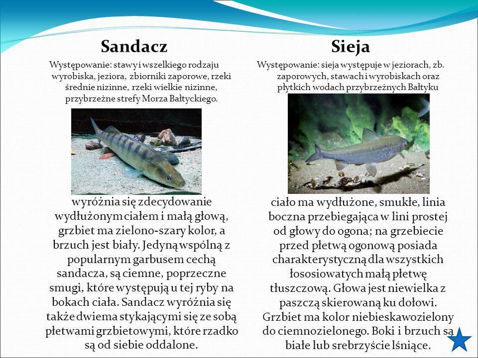 Sandacz Występowanie: stawy i wszelkiego rodzaju wyrobiska, jeziora, zbiorniki zaporowe, rzeki średnie nizinne, rzeki wielkie nizinne, przybrzeżne strefy Morza Bałtyckiego.