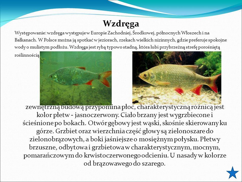 Wzdręga Występowanie: wzdręga występuje w Europie Zachodniej, Środkowej, północnych Włoszech i na Bałkanach. W Polsce można ją spotkać w jeziorach, rz