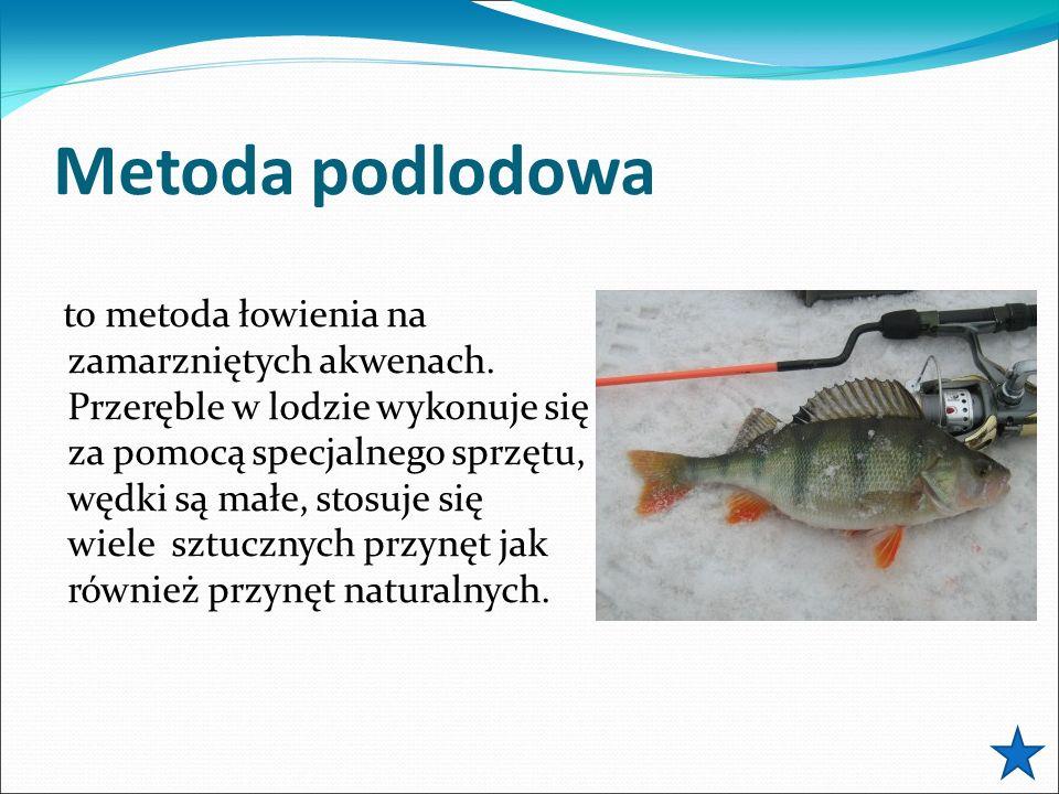 Metoda podlodowa to metoda łowienia na zamarzniętych akwenach. Przeręble w lodzie wykonuje się za pomocą specjalnego sprzętu, wędki są małe, stosuje s