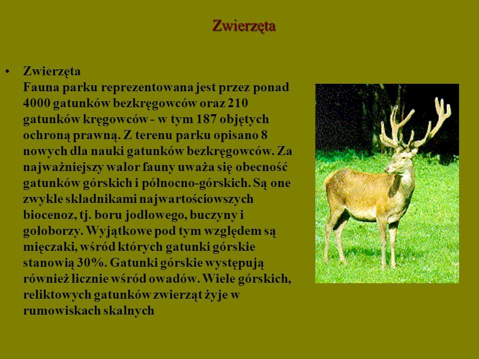 Zwierzęta Zwierzęta Fauna parku reprezentowana jest przez ponad 4000 gatunków bezkręgowców oraz 210 gatunków kręgowców - w tym 187 objętych ochroną pr