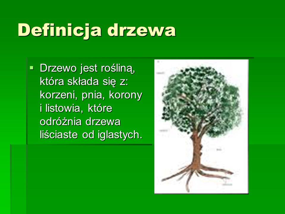 Mikrobudowa drewna Mikrobudowa drewna zależy od rodzaju drzewa.