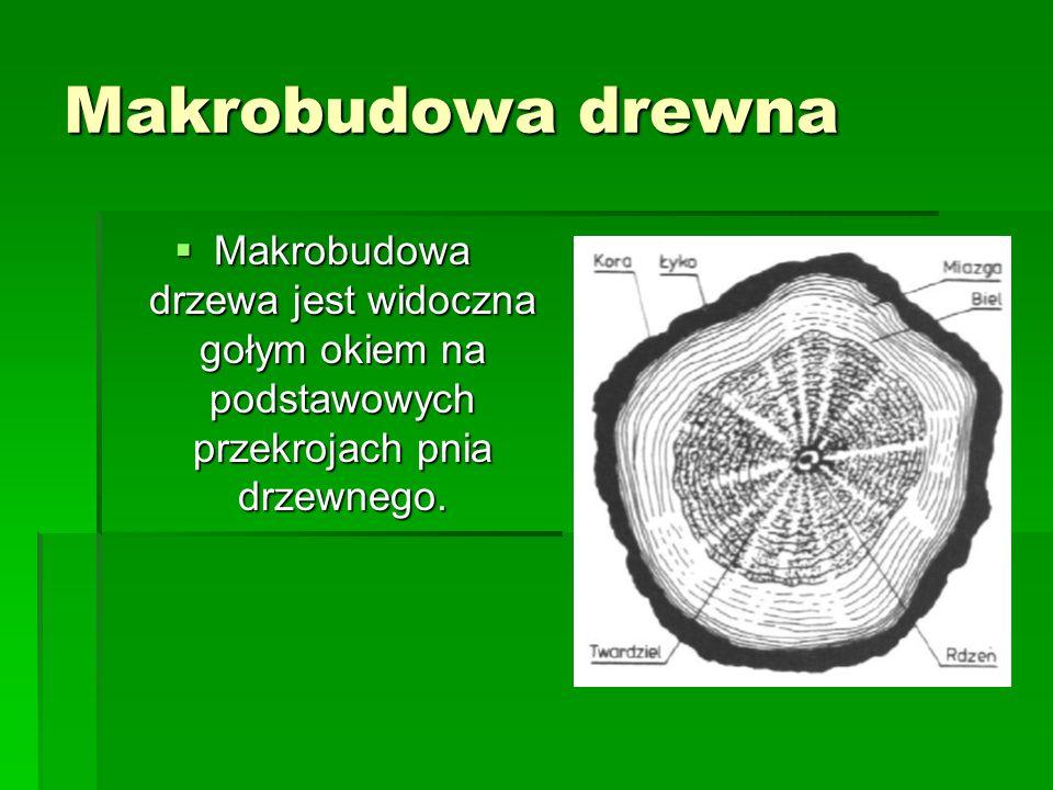 Makrobudowa drewna - kora Pierwsza zewnętrzna warstwa pnia, zwana korą, ma ciemną barwę, zawiera martwe komórki i jest zbudowana z tkanki okrywającej.