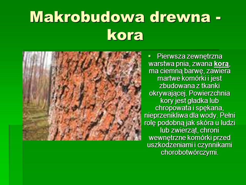 Makrobudowa drewna - łyko Pod korą znajduje się warstwa łyka, który przewodzi pokarmy od góry do dołu i jest ośrodkiem magazynowania pokarmów.