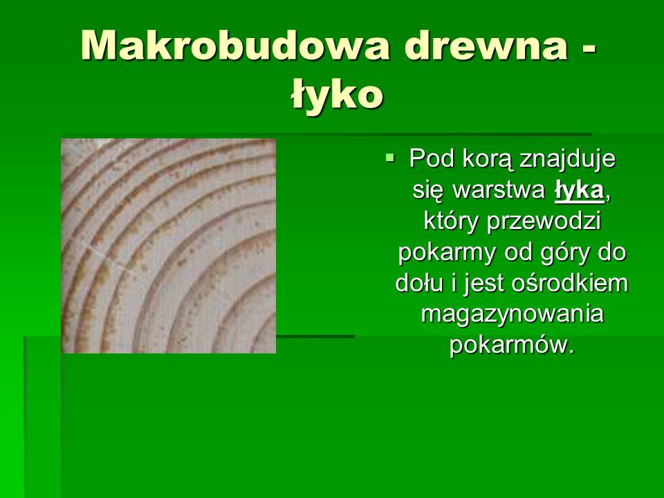 Makrobudowa drewna – tkanka twórcza Bezpośrednio za łykiem znajduje się warstwa tkanki twórczej, zwana miazgą, która stanowi strefę przyrostu drzewa.