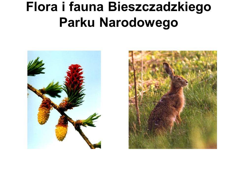 Flora i fauna Bieszczadzkiego Parku Narodowego