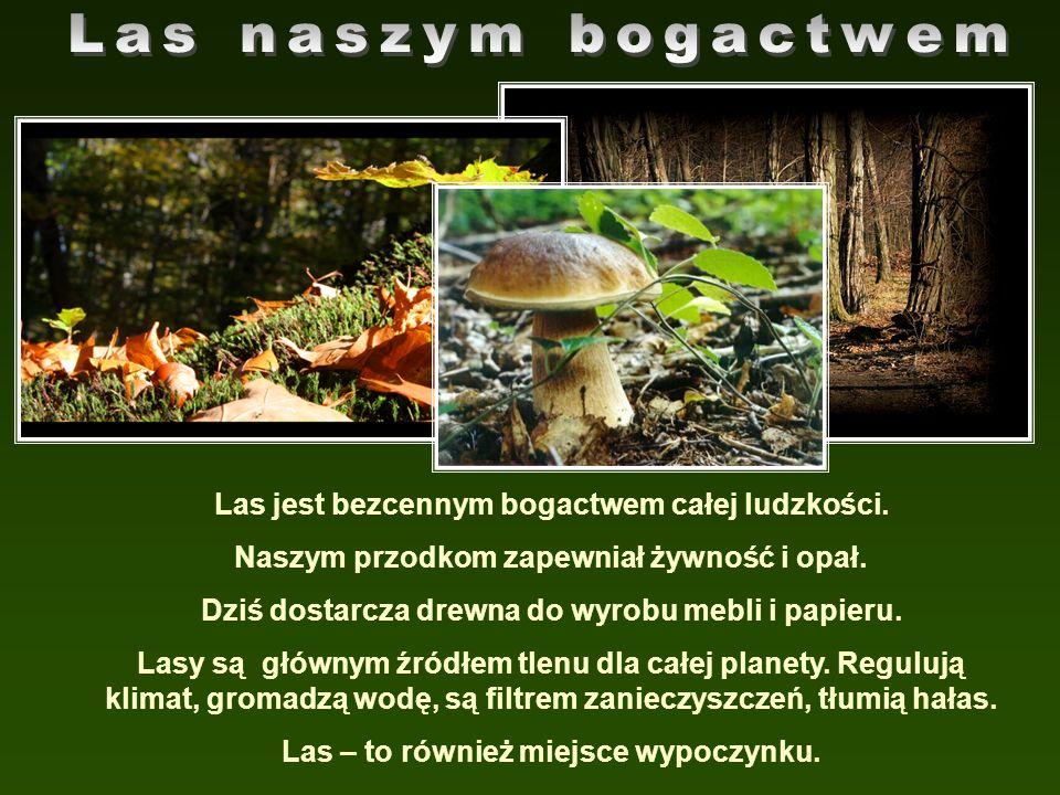 Las jest bezcennym bogactwem całej ludzkości. Naszym przodkom zapewniał żywność i opał. Dziś dostarcza drewna do wyrobu mebli i papieru. Lasy są główn