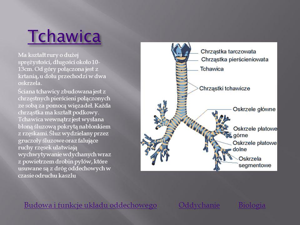 Krta ń Krta ń Jest to narząd położony między gardłem a tchawicą. Zbudowana jest z 9 chrząstek, połączonych ze sobą więzadłami i mięśniami, które służą