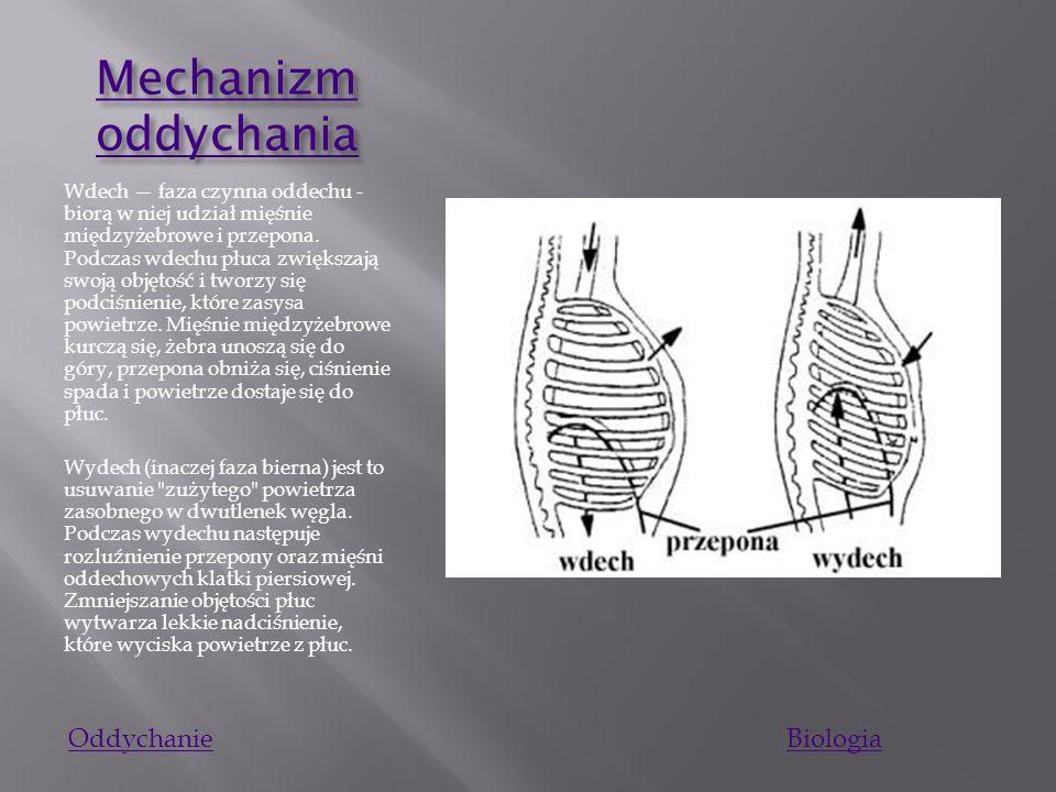 P ł uca P ł uca Płuca są narządem parzystym o gąbczastej strukturze, leżącym wewnątrz klatki piersiowej. Mają kształt zbliżony do spłaszczonych stożkó