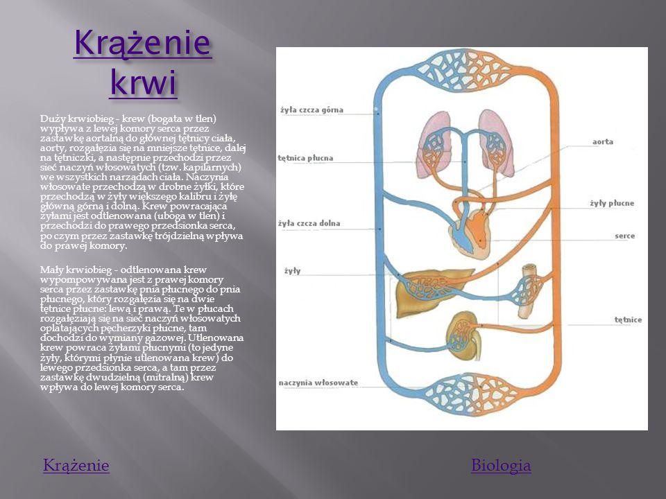 Uk ł ad krwiono ś ny Uk ł ad krwiono ś ny Układ krwionośny człowieka – układ zamknięty, w którym krew krąży w systemie naczyń krwionośnych, a serce je
