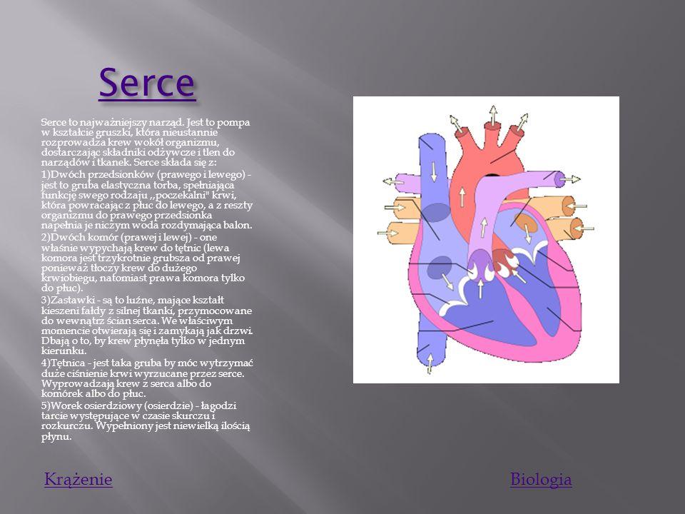 Kr ąż enie krwi Kr ąż enie krwi Duży krwiobieg - krew (bogata w tlen) wypływa z lewej komory serca przez zastawkę aortalną do głównej tętnicy ciała, a