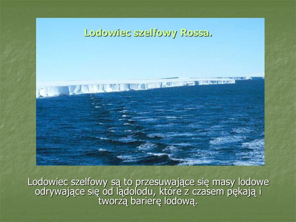 Lodowiec szelfowy są to przesuwające się masy lodowe odrywające się od lądolodu, które z czasem pękają i tworzą barierę lodową.