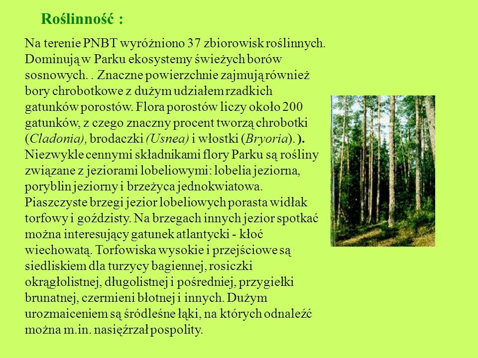 Park Narodowy Bory Tucholskie Park Narodowy