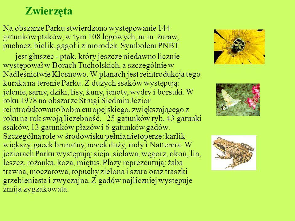 Roślinność : Na terenie PNBT wyróżniono 37 zbiorowisk roślinnych. Dominują w Parku ekosystemy świeżych borów sosnowych.. Znaczne powierzchnie zajmują