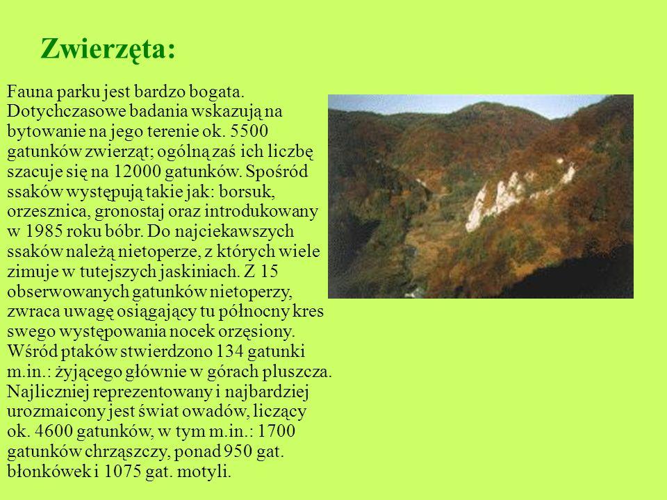 Roślinność : Do najciekawszych z nich zalicza się: nasz największy storczyk - obuwik pospolity, subalpejski chaber miękkowłosy, stepowa trawa - ostnic