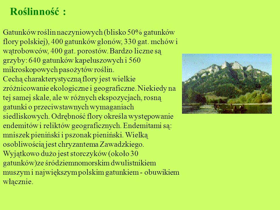 Pieniński Park Narodowy Pieniński Park Narodowy położony jest w Pieninach w południowej części kraju, w województwie małopolskim, na granicy polsko-sł
