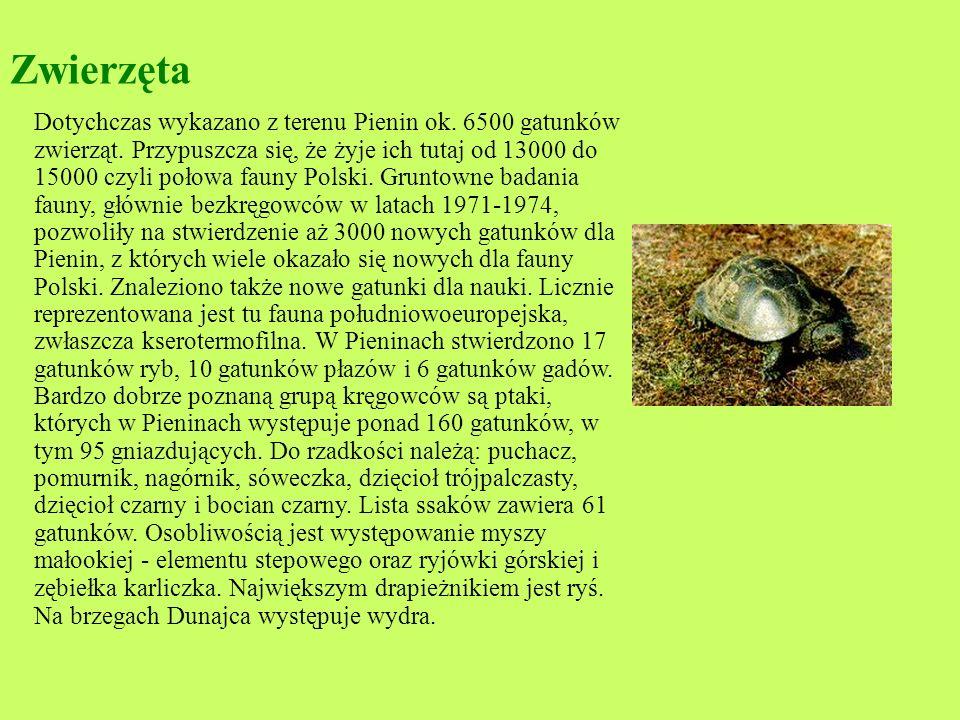 Roślinność : Gatunków roślin naczyniowych (blisko 50% gatunków flory polskiej), 400 gatunków glonów, 330 gat. mchów i wątrobowców, 400 gat. porostów.