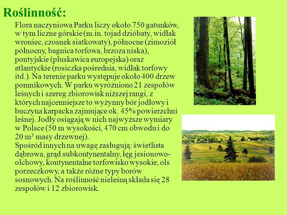 Roztoczański Park Narodowy Roztoczański Park Narodowy leży w środkowo- wschodniej części kraju, w województwie lubelskim. Obejmuje najcenniejsze przyr